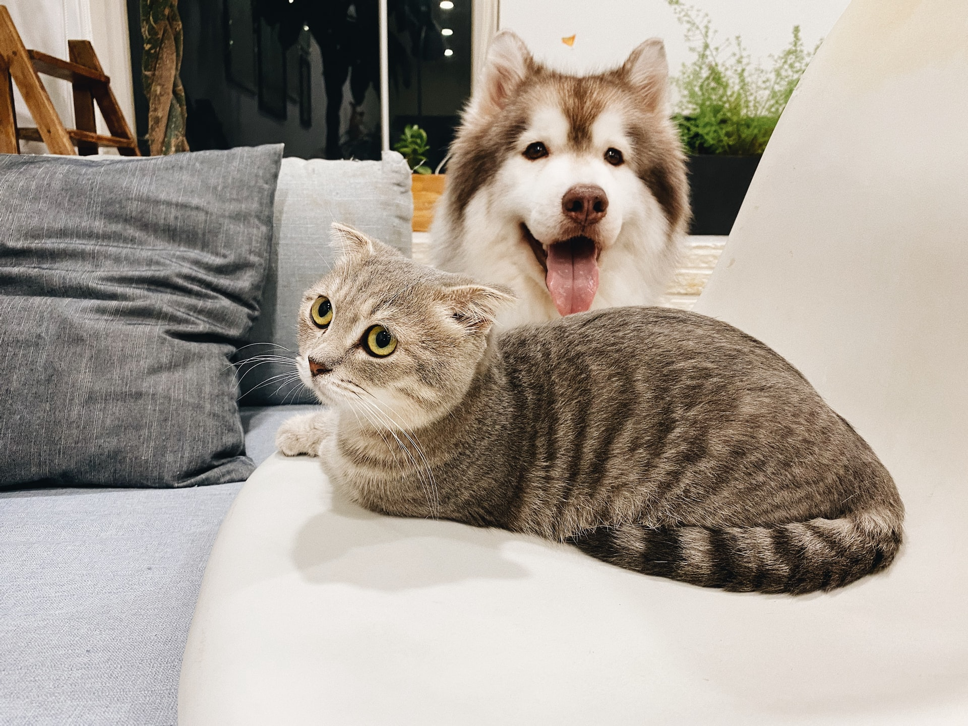 A cat sitting on couch