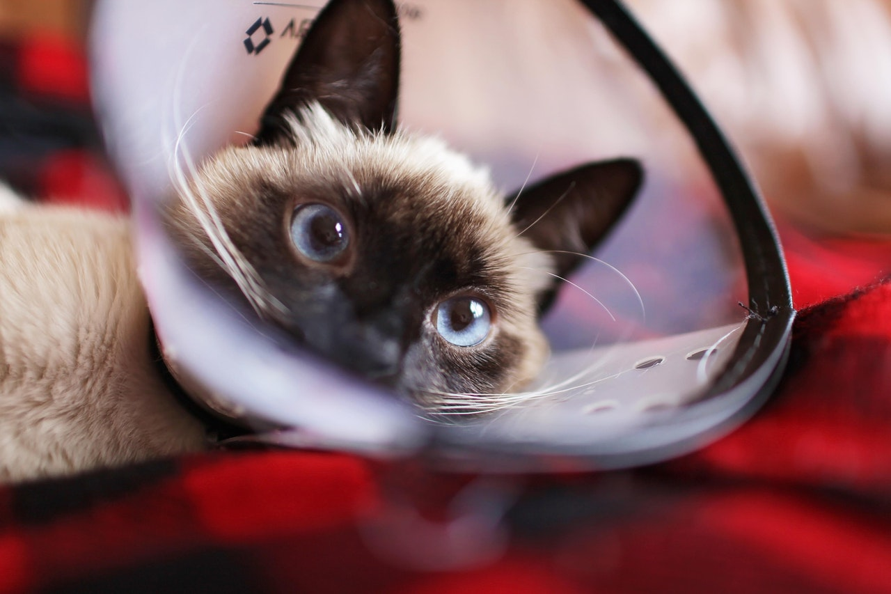 Advantages of Telemedicine For Your Pets
